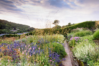 A path between beautifully planted borders featuring grasses such as Stipa gigantea and panicum, and herbaceous perennials in...