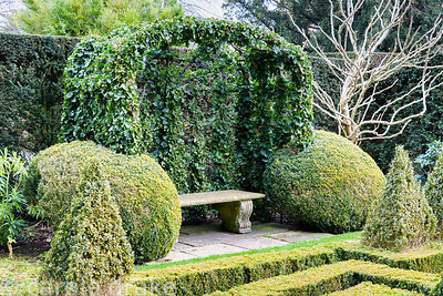 An ivy covered arbour framed with clipped box balls in the Knot Garden at Bourton House in the Cotswolds in January