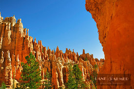 Erosion landscape in Bryce Canyon at Peekaboo Trail - North America, USA, Utah, Garfield, Bryce Canyon, Peekaboo Trail, west ...