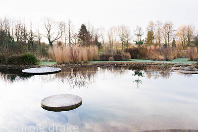 Natural swimming pool surrounded by grasses, willows and cornus at Ellicar Gardens, Notts