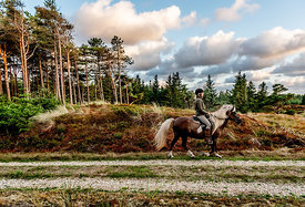 Danish woman riding horse in Thy woods, Denmark 27