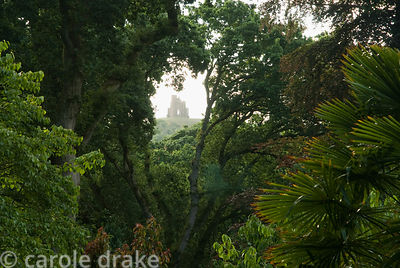 St Catherine's Chapel sits on a hill outside the village, seen through trees from the garden. Abbotsbury Subtropical Gardens,...
