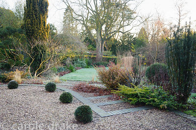 Grey bricks edge gravel steps in the front garden with clipped yew spheres and shrubs in surrounding beds including Pseudowin...