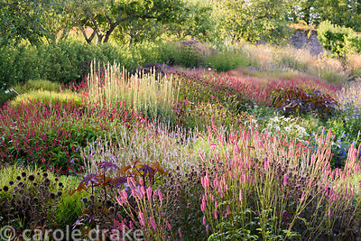 Planting in the walled garden mixes grasses and late season herbaceous perennials that flower long into autumn. Grasses inclu...