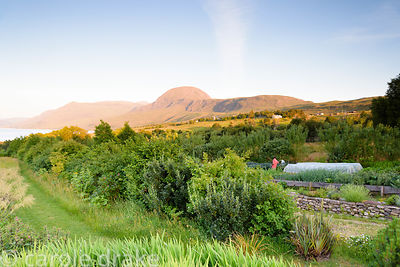 Evening in the garden at 2 Durnamuck, Little Loch Broom, Wester Ross in July with the distinctive form of Sail Mhor beyond.