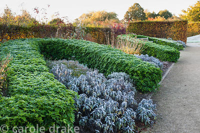 Walled garden designed by Brita von Schoenaich featuring a long, curvaceous hedge of Choisya ternata interplanted with Salvia...