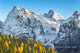 Mountain impression larch forest and Cima bel Pra - Europe, Italy, Veneto, Belluno, Sexten Dolomites, Misurina (Alps, Dolomit...