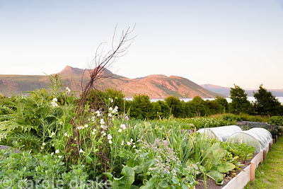 Evening in the garden at 2 Durnamuck, Little Loch Broom, Wester Ross in July with  backdrop of sea loch and mountains and rai...