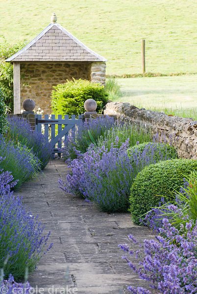 Path edged with lavender, catmint, irises and clipped box leads to gazebo at the end of the rill garden. Private garden, Dors...