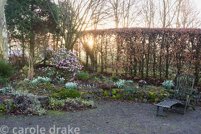 Morning sun breaks through surrounding trees and a beech hedge backing a bank planted with snowdrops and a rhododendron at Hi...