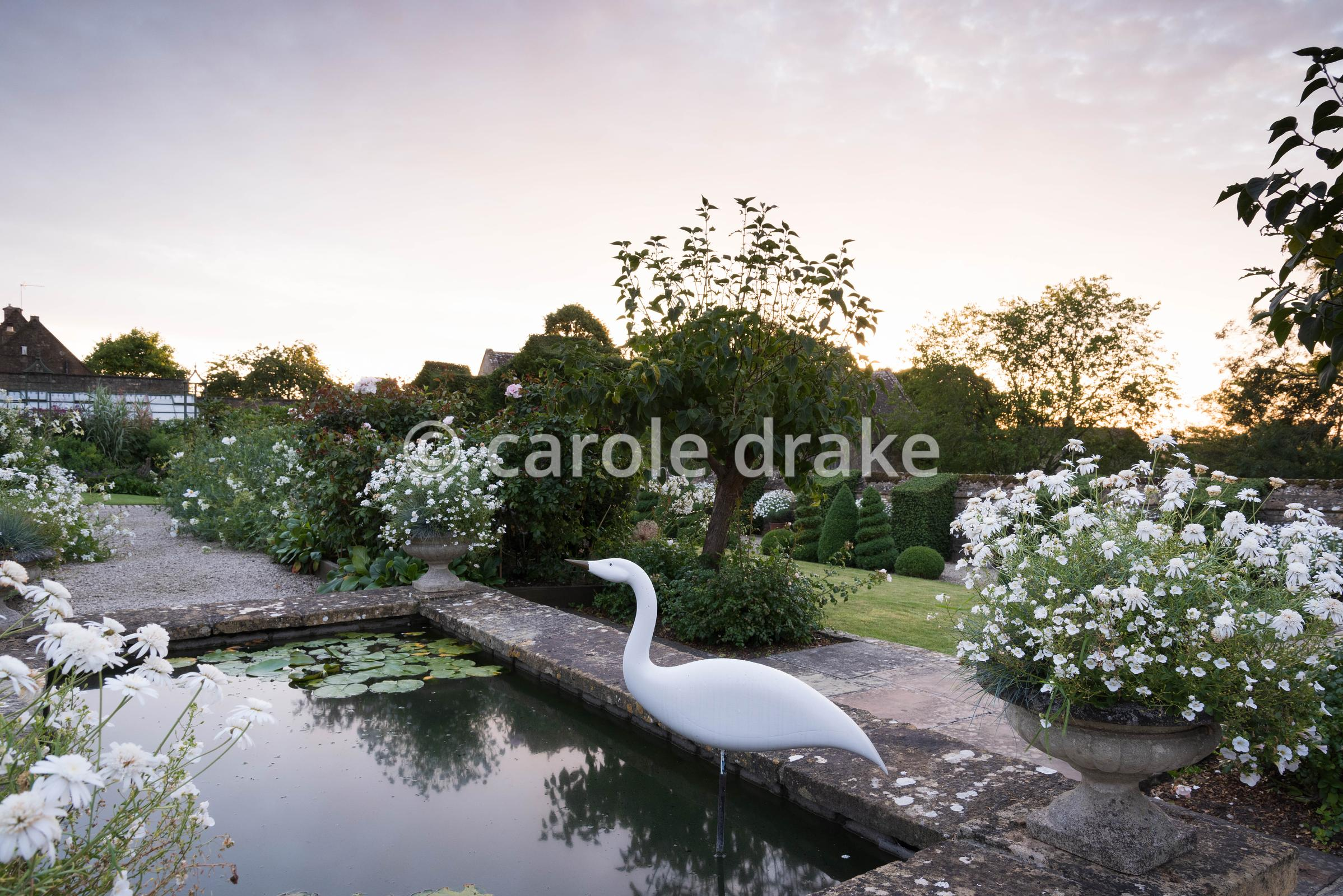 The White Garden at Bourton House, Moreton-in-Marsh in August at dawn, with a central pond framed by pots of Argyranthemum 'S...