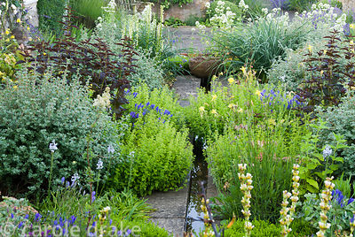 Planting around raised rill includes white valerian, Centranthus ruber 'Albus', white winter heathers, shrubby potentilla, de...