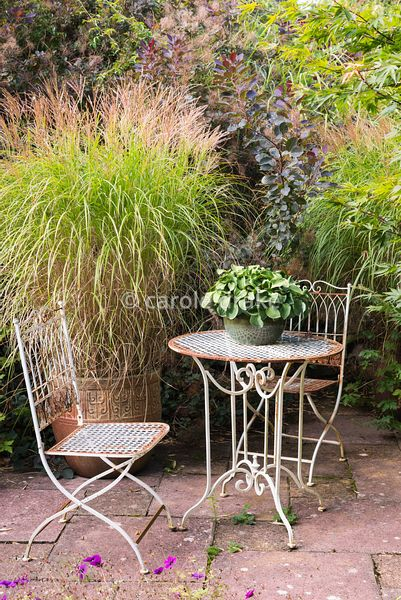 Bistro chairs and table with pot of Hosta 'Blue Mouse Ears' surrounded by acers, cotinus and containers of Miscanthus sinensi...