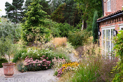Early autumn in a garden in rural Nottinghamshire planted with a mix of herbaceous perennials and grasses including Hylotelep...