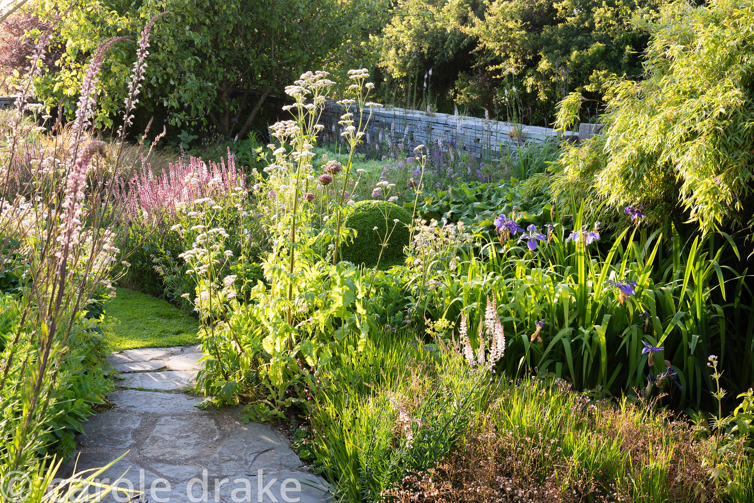 Path between borders planted with Linaria purpurea 'Canon Went', Valeriana officinalis, Allium 'Firmament', blue irises and s...