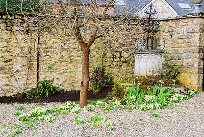 Self seeded primroses cluster around an old well head in the walled kitchen garden. Melplash Court, Bridport, Dorset, UK