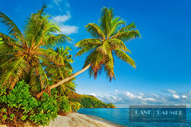 Coconut palm and sand beach (lat. cocos nucifera) - Africa, Seychelles, Praslin, Anse la Blague (Indian Ocean) - digital