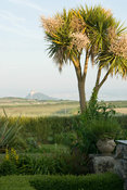 View across surrounding fields to St Michael's Mount framed by tall cordylines. Ednovean Farm, Marazion, Cornwall, UK