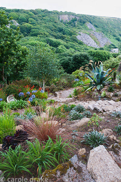 Succulents, celmisias, grasses and agapanthus enjoy a well drained, sunny bank.