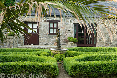 Formal box parterre with central water feature surrounded by box spheres, and framed by date palm. Ednovean Farm, Marazion, C...