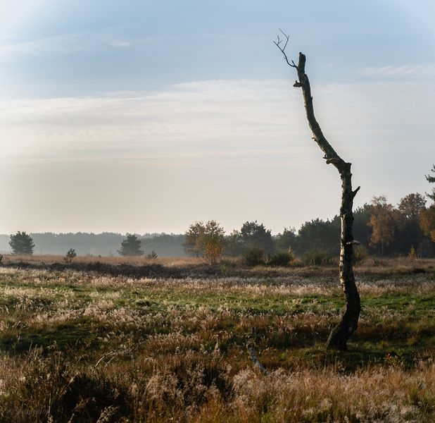 Dead tree in autmn keath landscape