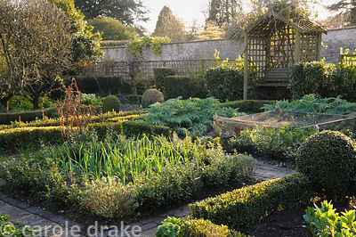 Fresh leaves of onions and globe artichokes catch the evening sun in the potager at Barnsley House, Cirencester, Glos, UK