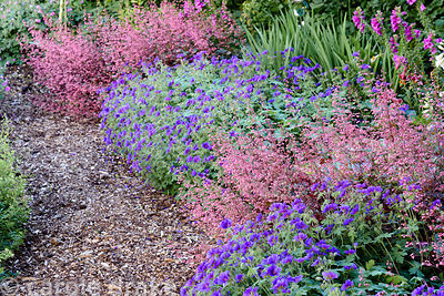 Path beside the farm pond edged with Geranium x magnificum and heuchera at Malthouse Farm, Hassocks, Sussex