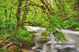 Brook in moss covered beech forest - Europe, France, Bourgogne-Franche-Comte, Doubs, Pontarlier, Pierrefontaine-les-Varans, L...