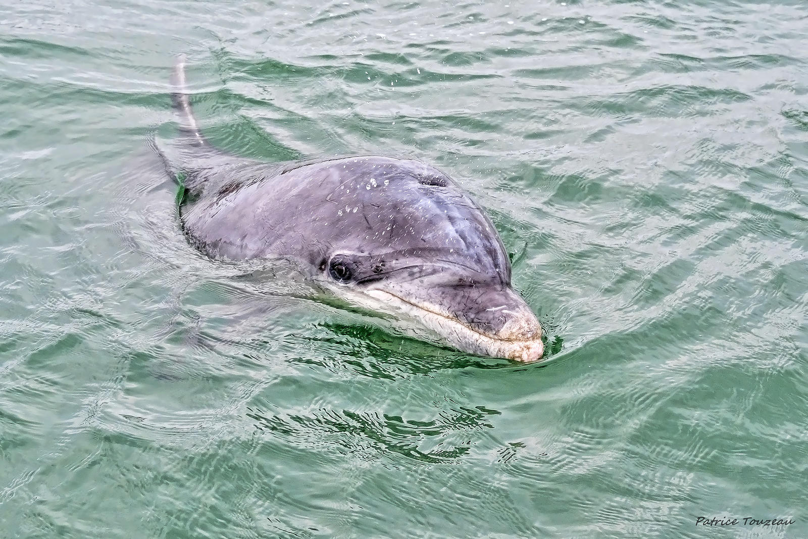 pictures of zafar the dolphin
