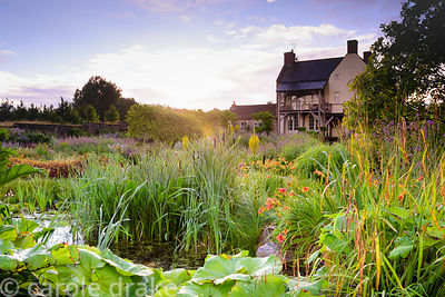 Naturalistic pond surrounded by lush planting including bulrushes, day lilies, Carex pendula and Verbena bonariensis at the Y...