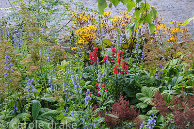 Streamside planting including ligularia, lobelias, rodgersias and astilbes