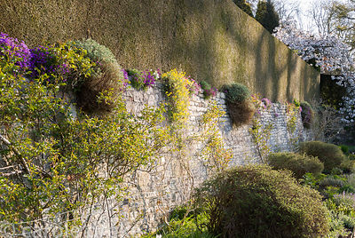 Retaining wall at the back of the pool terrace supports aubretia and rock roses, with roses in the border below and white flo...
