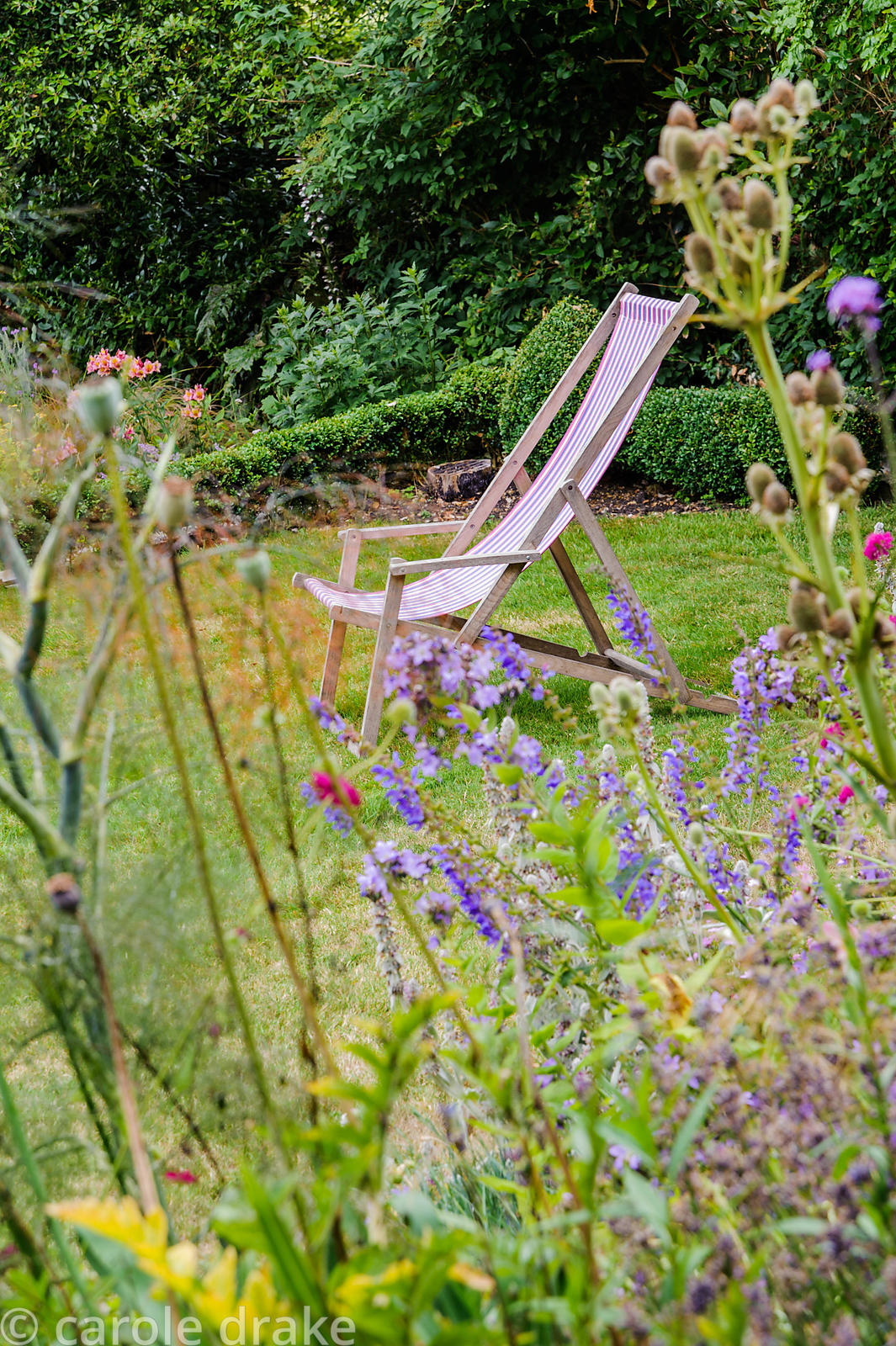Deckchair on the lawn near the house framed by flowers of agapanthus, salvias, eryngiums and fennel.