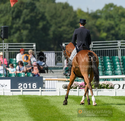 Pascal Leroy and MINOS DE PETRA - Land Rover Burghley Horse Trials 2016