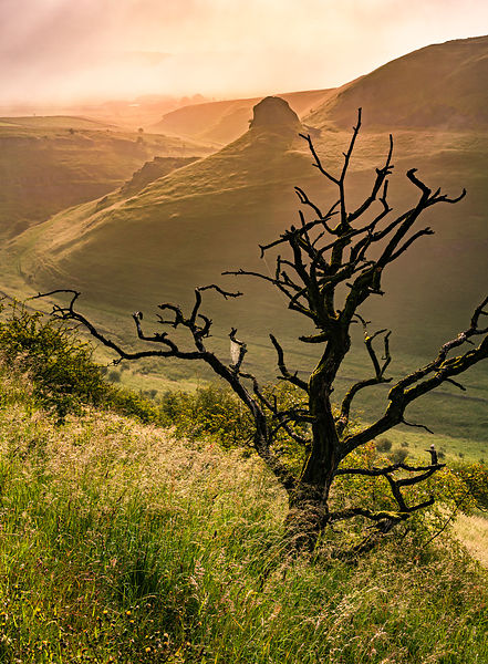 Peter's Stone and a dead tree | Cressbrook Dale