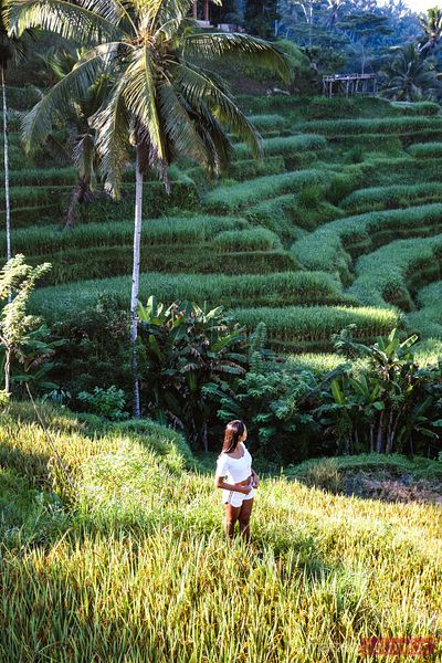 Female tourist in rice paddy, Ubud, Bali, Indonesia