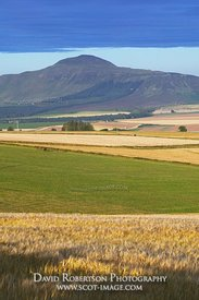 Image - View over Barley Fields to the Lomond Hills, Scotland