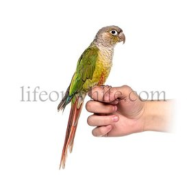 Tropical bird on an human hand