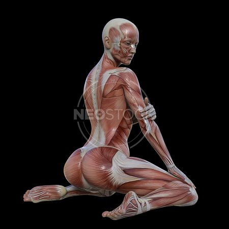 cg-body-pack-female-muscle-map-neostock-22