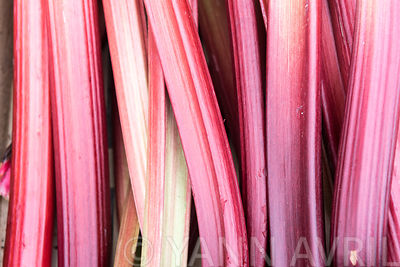 Rheum-Rhubarb on a wooden table.