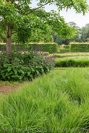 Molinia caerulea subsp. caerulea 'Poul Petersen' in the Drifts of Grasses Garden at Scampston Hall Walled Garden, North Yorks...