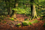 Early autumn in Padley Gorge