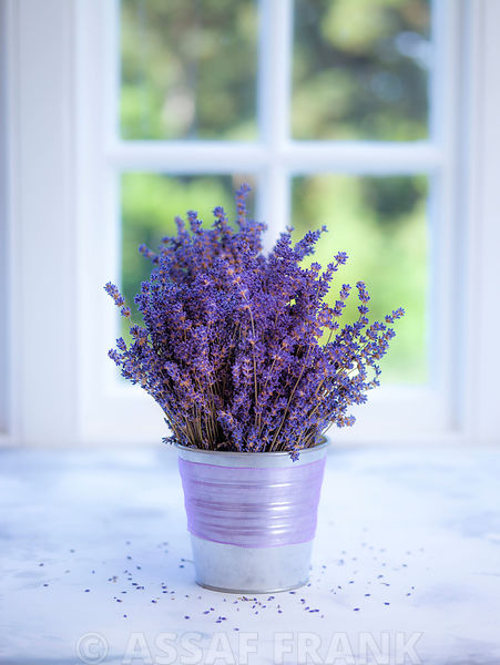 Bunch of lavender in vase by the window - Indoors