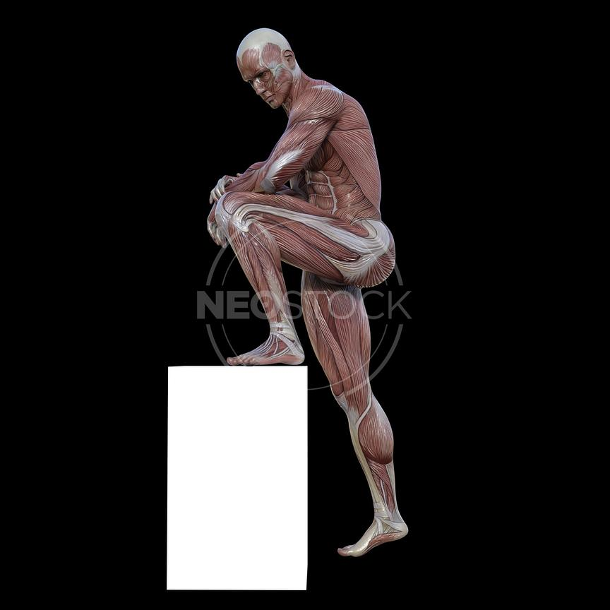 cg-body-pack-male-muscle-map-neostock-26