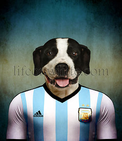 Argentine Dogo wearing an Argentine football jersey with the colors of the flag in the background