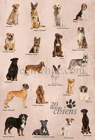 Dog breeds poster in French