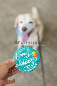 "Close-up of ""Happy Birthday"" cookie with dog waiting in the background"