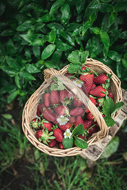 Starwberries in a basket