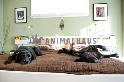 Two dogs laying on their parent's bed
