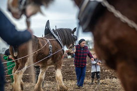 Highlands of Fife ploughing match. 2019